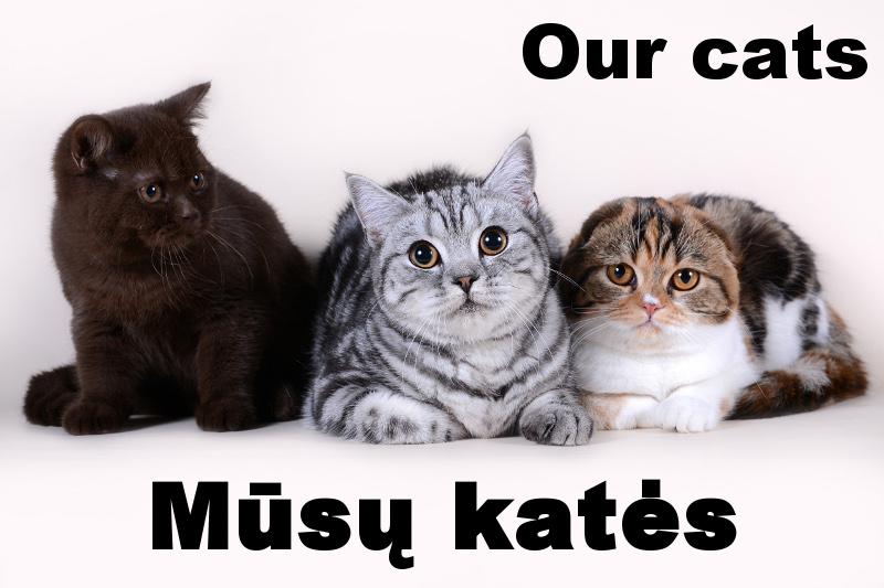 Mūsų katės