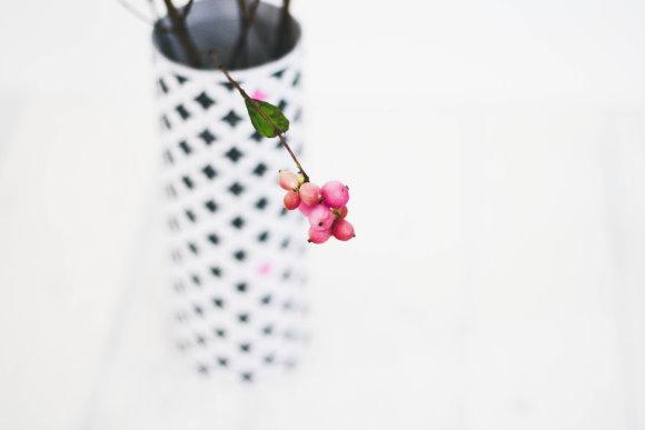 Knallerbsenstrauch in selbstgebastelter Blumenvase