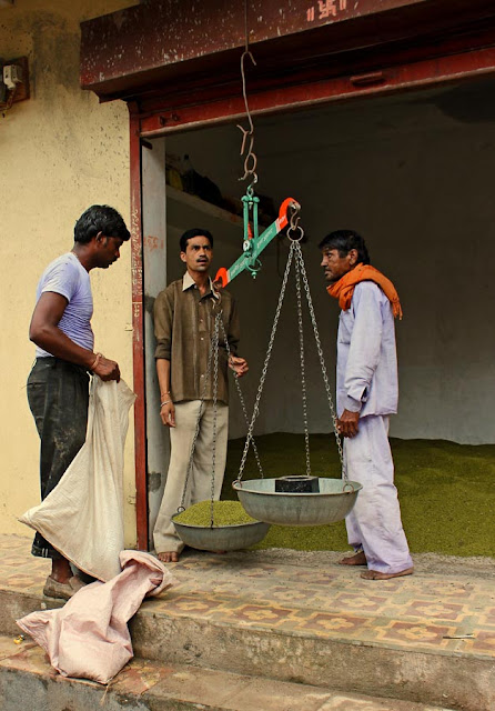 grain being weighed