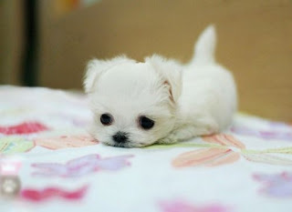 Zoo Animals Funny Cute White Puppy New Picttures 2012
