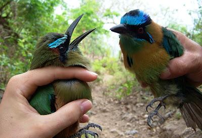 birdwatching Nicaragua