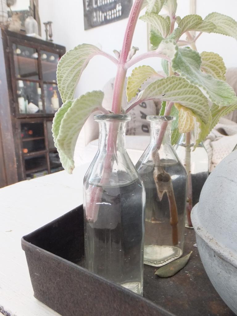 princessgreeneye hortensienzeit und eine weitere h keldecke. Black Bedroom Furniture Sets. Home Design Ideas