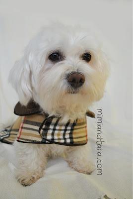 Dog Coat Waterproof Warm Harnes Uk