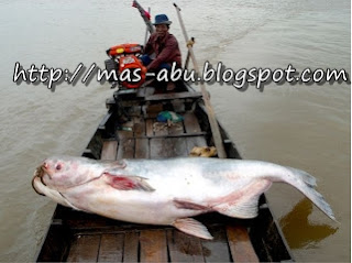 4. Mekong Giant Catfish