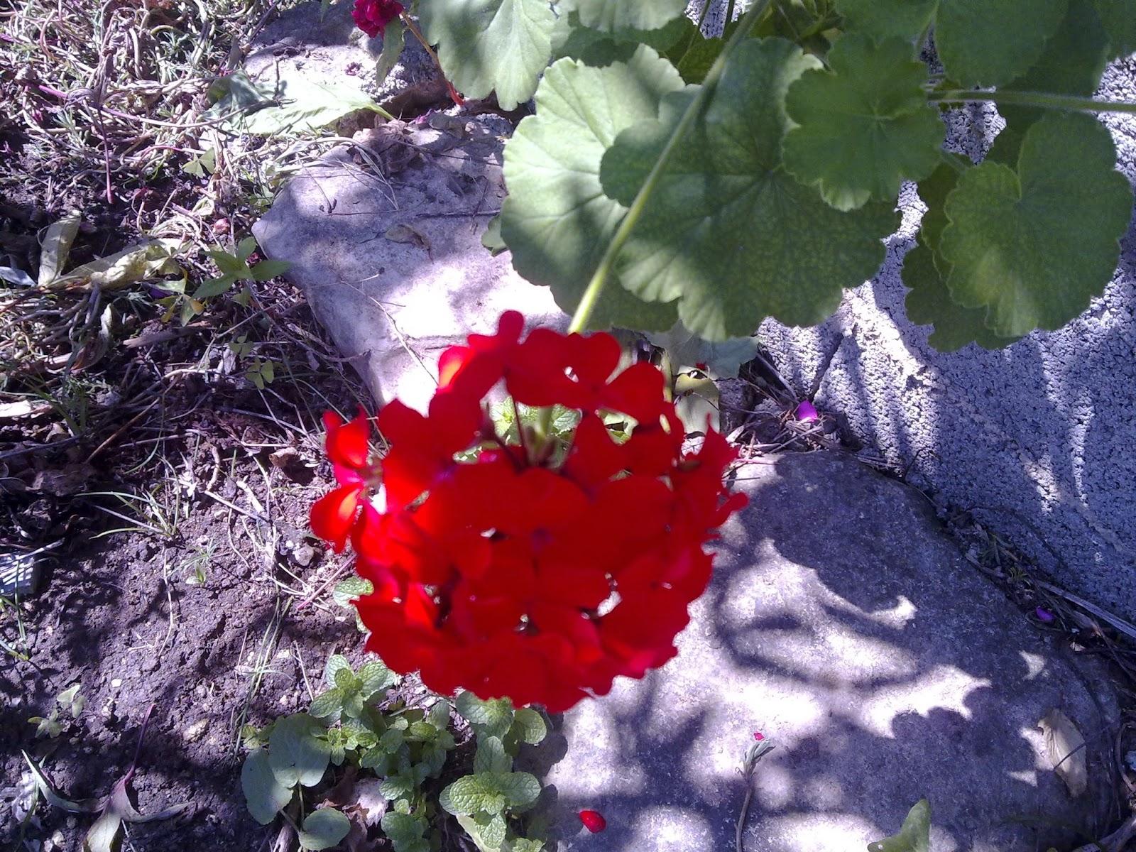 agricultura flor