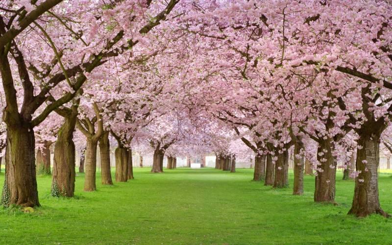 Притча о любви: Вишневый сад