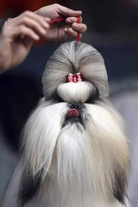 http://2.bp.blogspot.com/-5xqNPQesXus/TpKfj2y6FoI/AAAAAAAABUU/0VnBFgKM30A/s1600/a97931_animal-hair_2-gala1.jpg