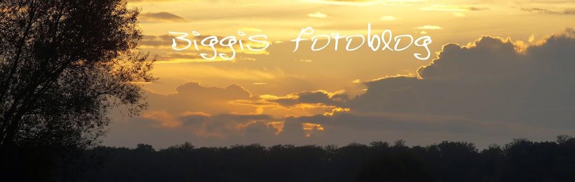 Biggis Fotoblog