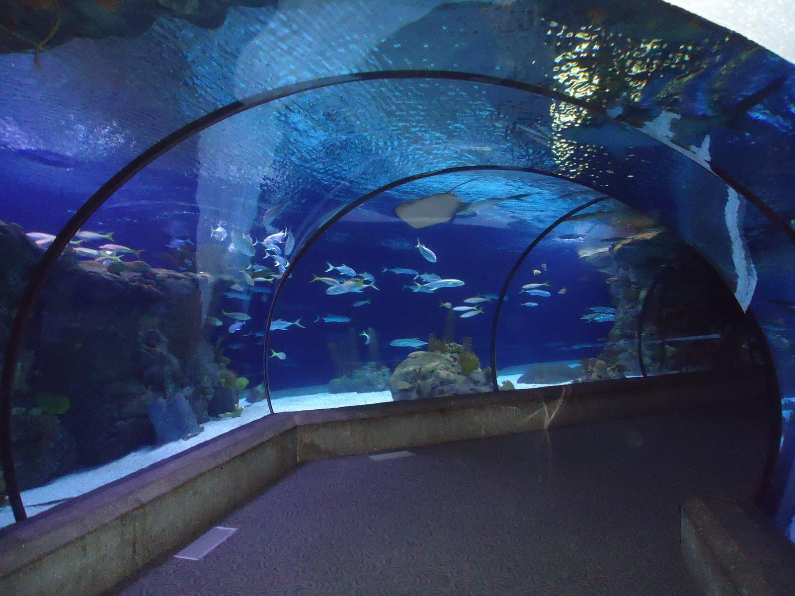 Fish aquarium zoo exploring omaha scott aquarium henry for The fish omaha