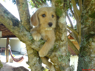 foto cachorro marrom