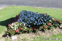 Arreglo Floral blancas y rojas