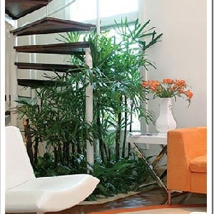 Plantas ornamentais para interiores dicas na web - Plantas interiores ...
