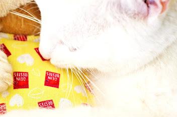 Katzenminze Schmusekissen im Test