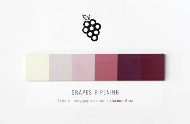 Shades of Change - Marin Dearie - Grapes Ripening