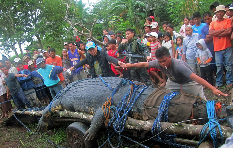 World's Largest Crocodile Ever