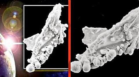 particula biologica extraterrestre
