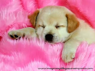 hermoso cachorrito
