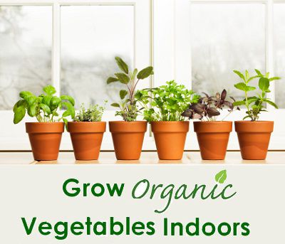 How to grow organic vegetables indoors year round sweet for Growing vegetables indoors