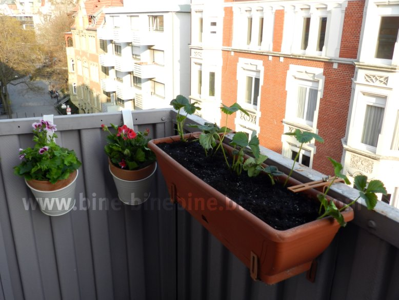 liebst ckelschuh obst und gem seacker auf dem balkon. Black Bedroom Furniture Sets. Home Design Ideas