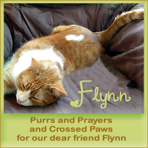 Purrs for Flynn, Please.