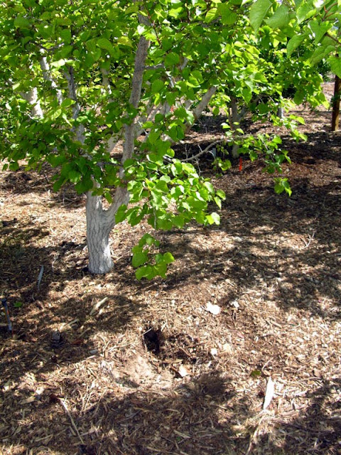 Gopher Killing Plants Xtremehorticulture of ...