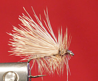 Fly tying the buck caddis