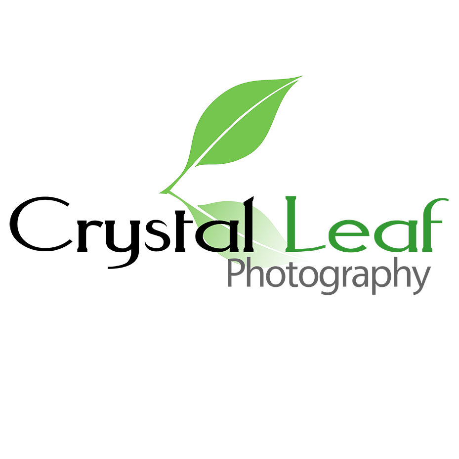 Crystal Leaf Photography