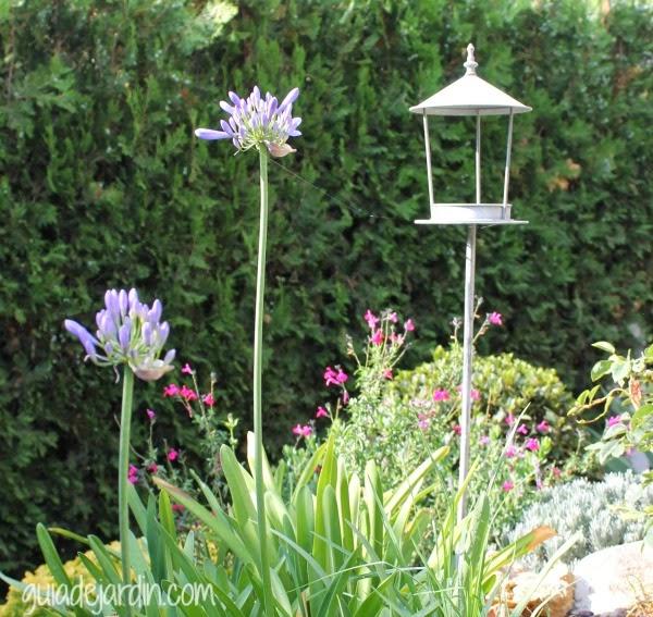 Algunas flores de verano guia de jardin for Guia de plantas de jardin