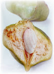 Obat Mata Herbal Radix Vitae telah banyak membantu banyak  manusia dan juga hewan