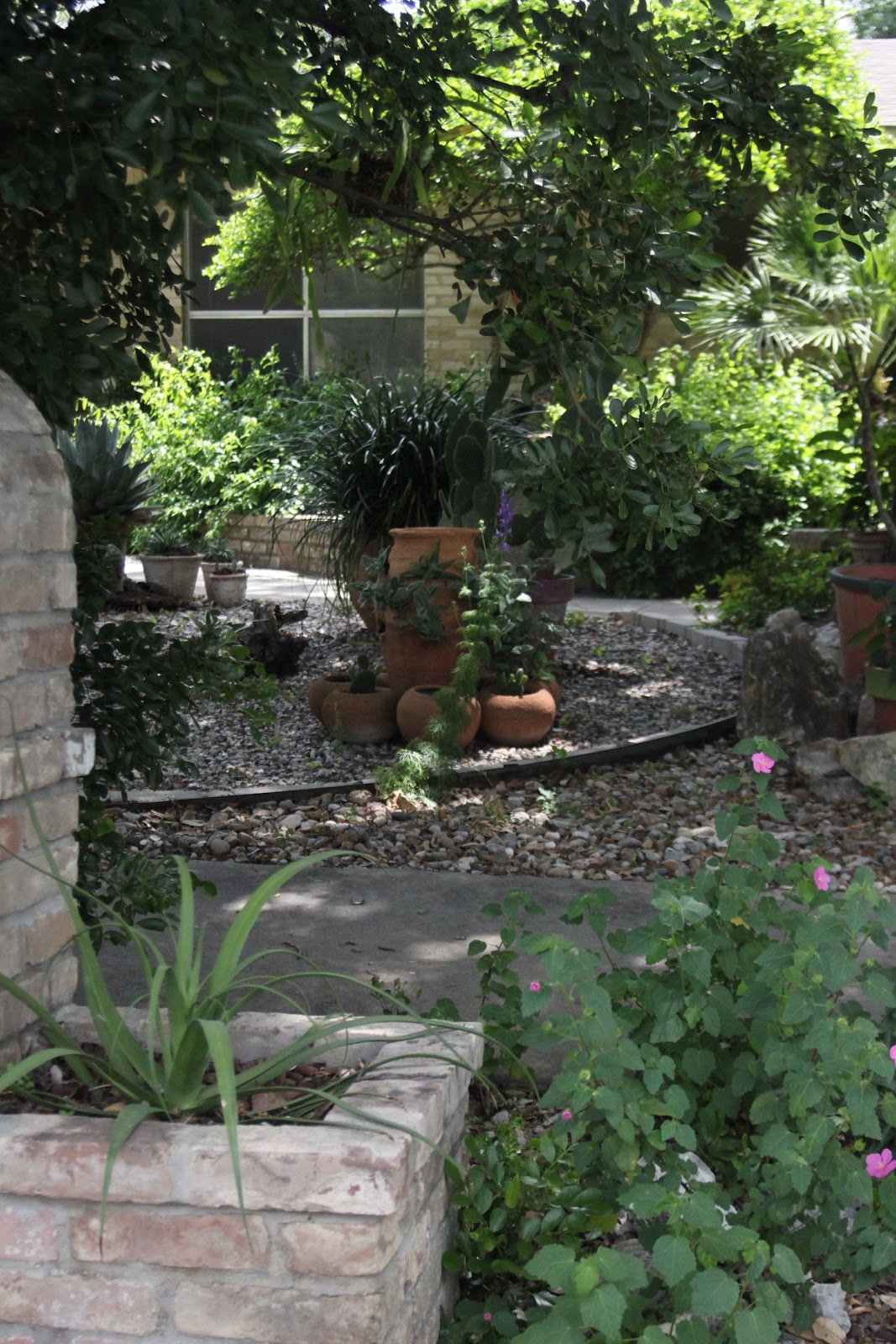 rock oak deer ragna 39 s garden part two xeriscape front yard. Black Bedroom Furniture Sets. Home Design Ideas