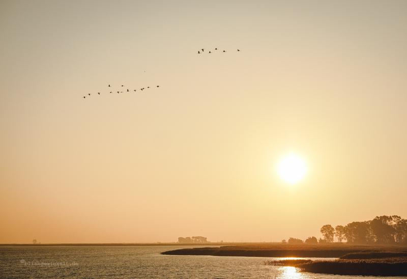 Fliegende Kraniche im Sonnenaufgang