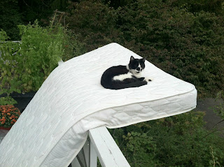 Cat sitting on a precariously balanced mattress