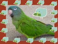 Bargain Birdie