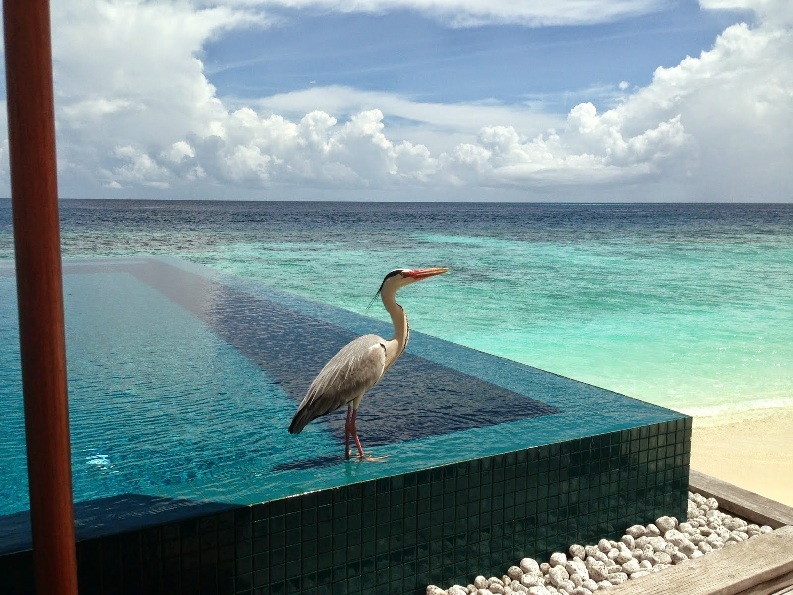 Leija graf a journey in life one resort one island for Life of pi swimming pool