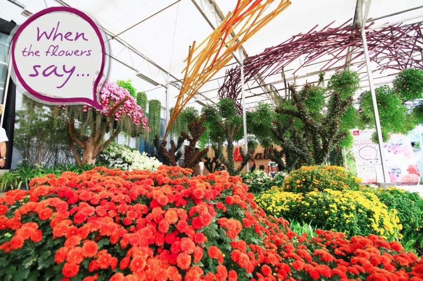 งานดอกไม้ ดาษดาแกลเลอรี่ เขาใหญ่ ปราจีนบุรี 2557