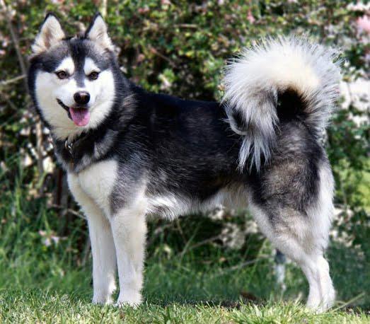 Es dificil saber con exactitud cuantas razas de perros existen