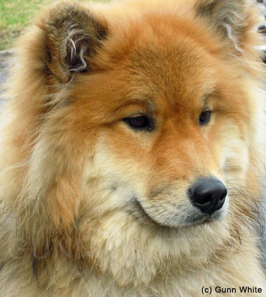 Unique Dogs And quite a unique dog who Unique Looking Dog Breeds