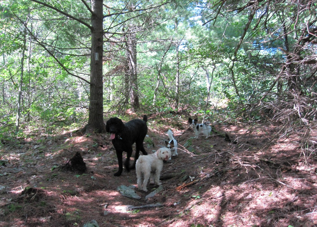 Mount Laurel Rescue Center Dogs