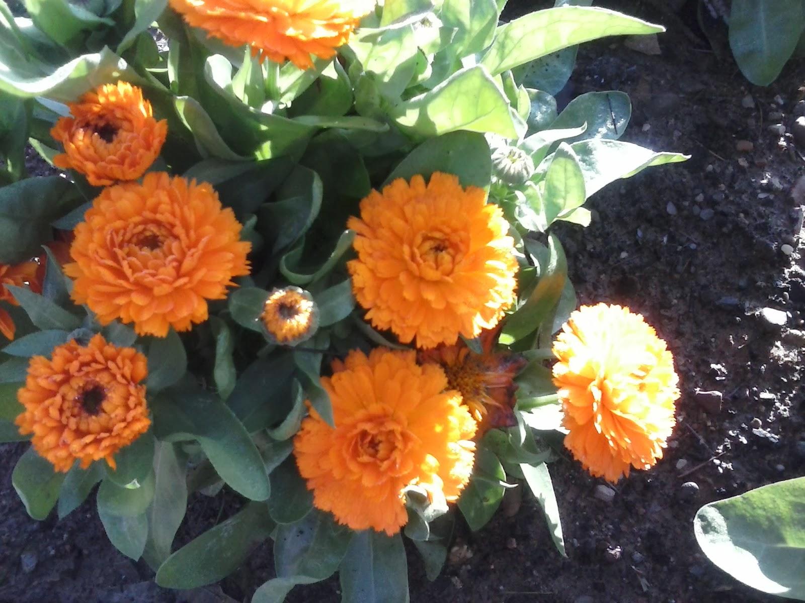 Fotos de plantas de interior con flores - Plantas de exterior con flor ...