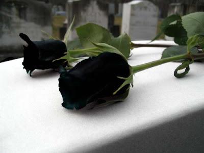 Kumpulan gambar mawar hitam