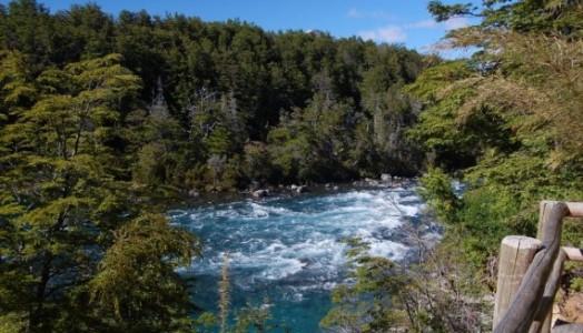 Resultado de imagen para Bosques Patagónicos