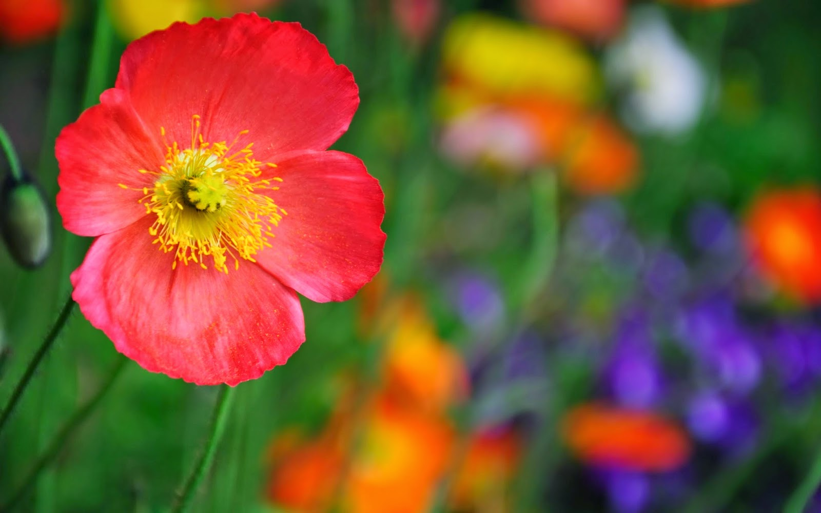 high resolution flower themes background frame
