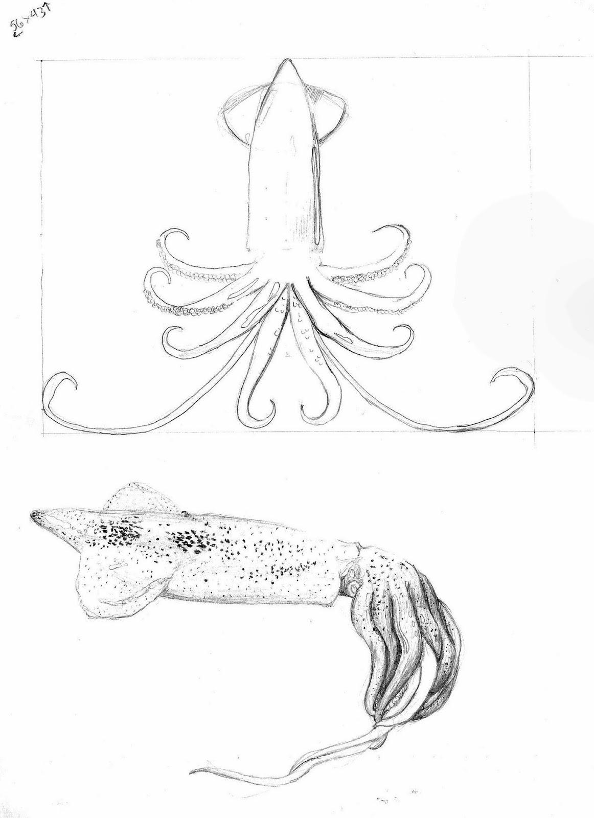 how to draw like inky