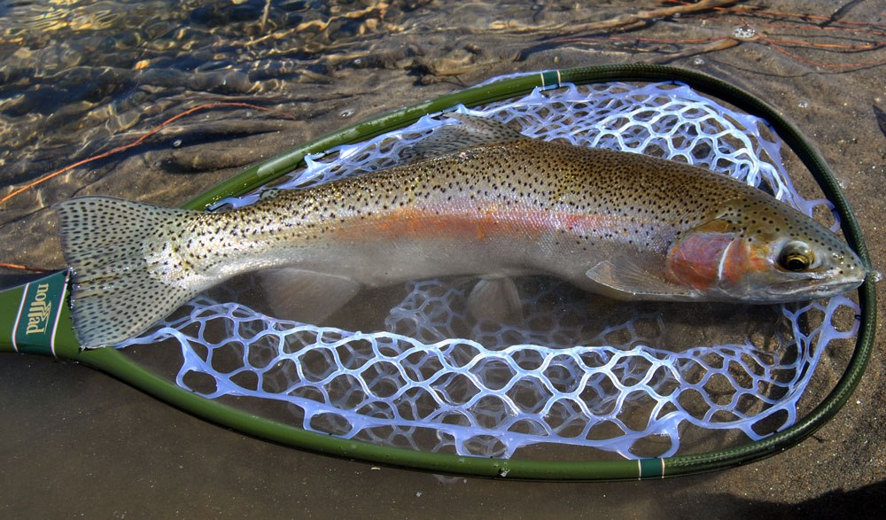 The fiberglass manifesto nomad fly fishing 39 s latest offerings for Fly fishing net