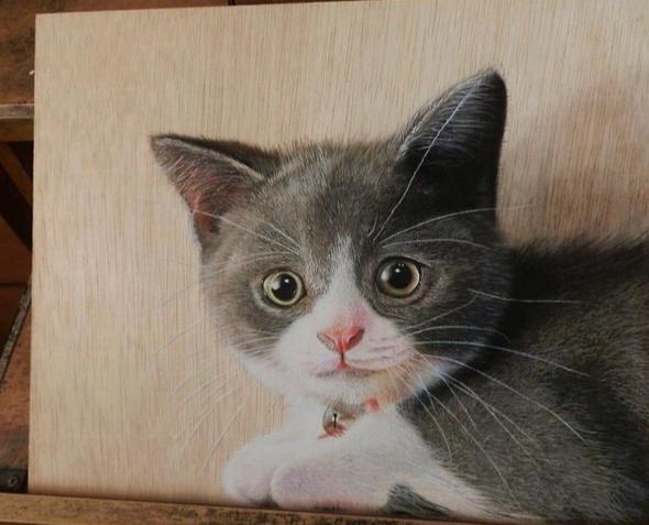 Lukisan 3Dimensi Kucing oleh Ivan Hoo