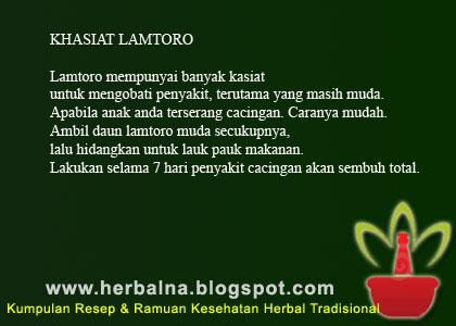 KHASIAT LAMTORO Lamtoro mempunyai banyak kasiat untuk mengobati penyakit, terutama yang masih muda