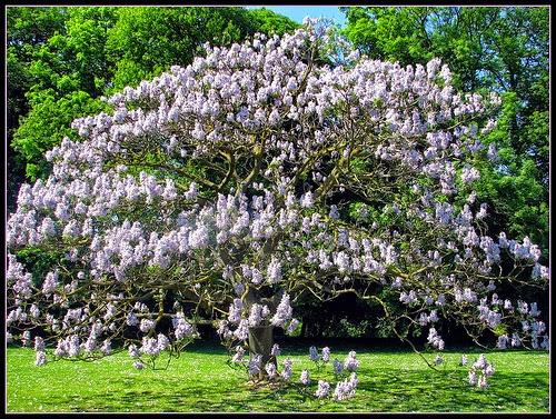 Mon arbre le de vivre le douaire tout savoir sur le for Arbre qui pousse rapidement