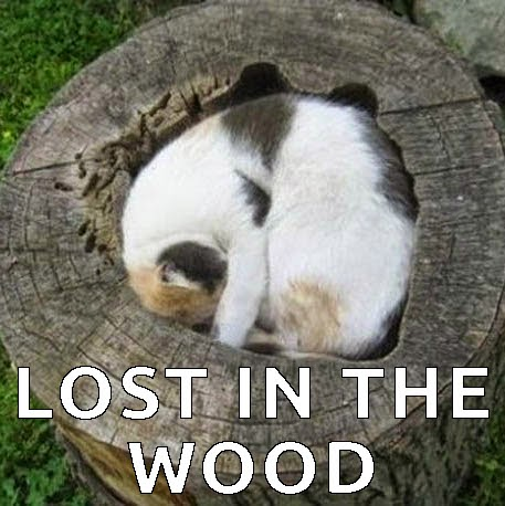 i lost my cat in the woods