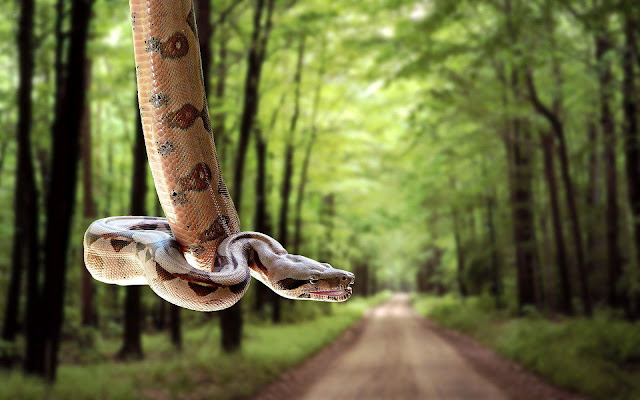 Photo with a snake hanging above a road