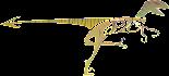 Raptor's Design